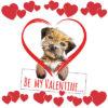 Border Terrier Valentine's Day Card